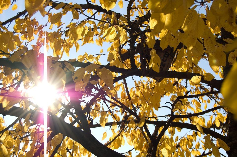 autumn-1040837_960_720.jpg